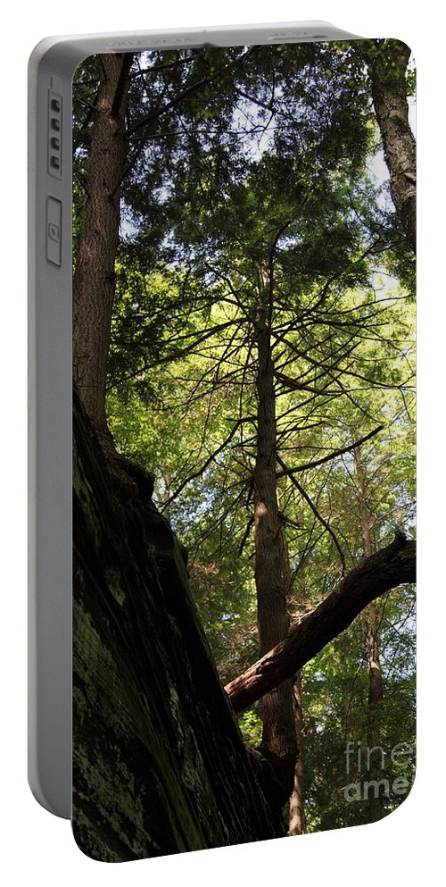Tree Portable Battery Charger featuring the photograph The Fallen Triangle by Amanda Barcon