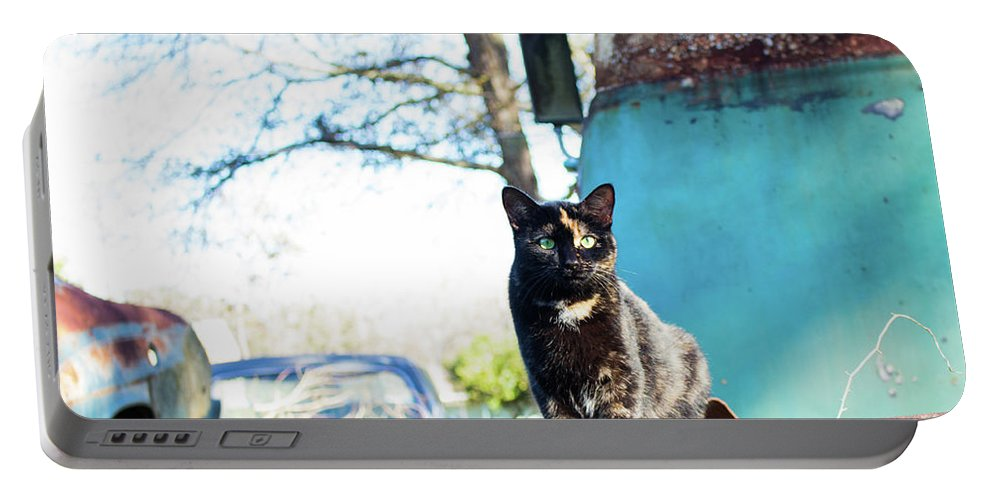 Cats Portable Battery Charger featuring the photograph The Ferals-1402 by Oonabot Photography