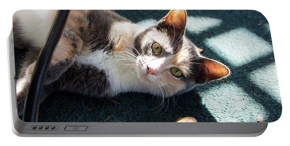 Cats Portable Battery Charger featuring the photograph The Ferals-1407 by Oonabot Photography