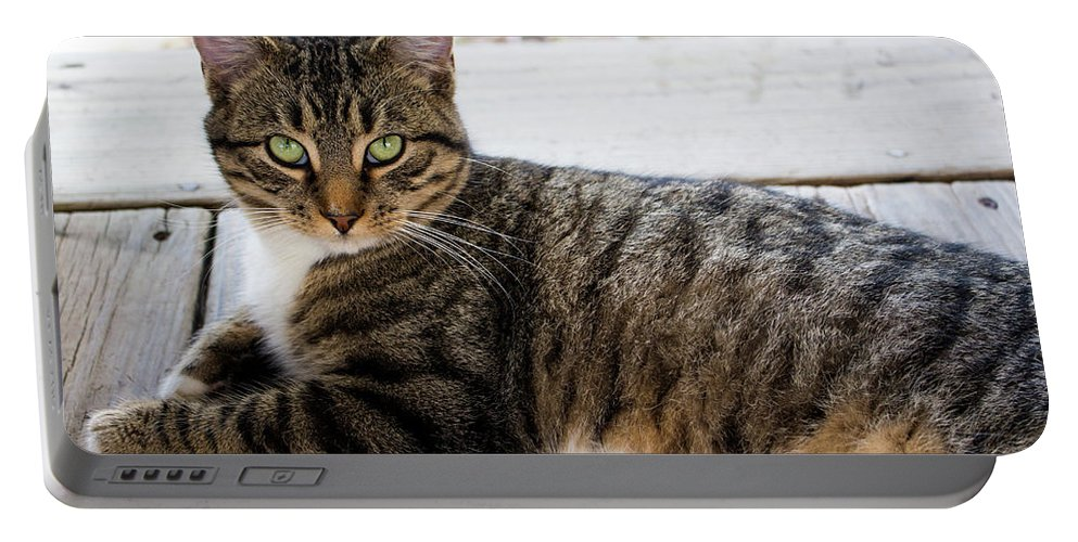 Cats Portable Battery Charger featuring the photograph The Ferals-1412 by Oonabot Photography