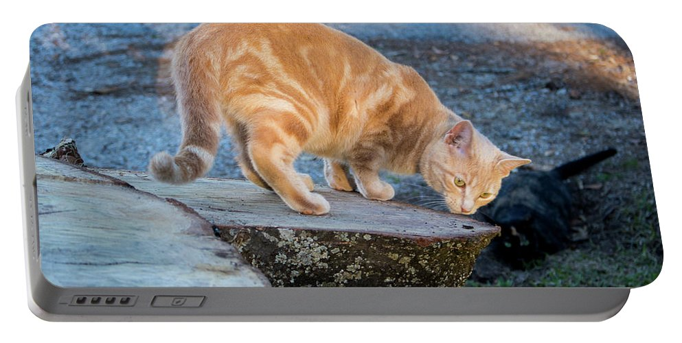 Cats Portable Battery Charger featuring the photograph The Ferals-1451 by Oonabot Photography