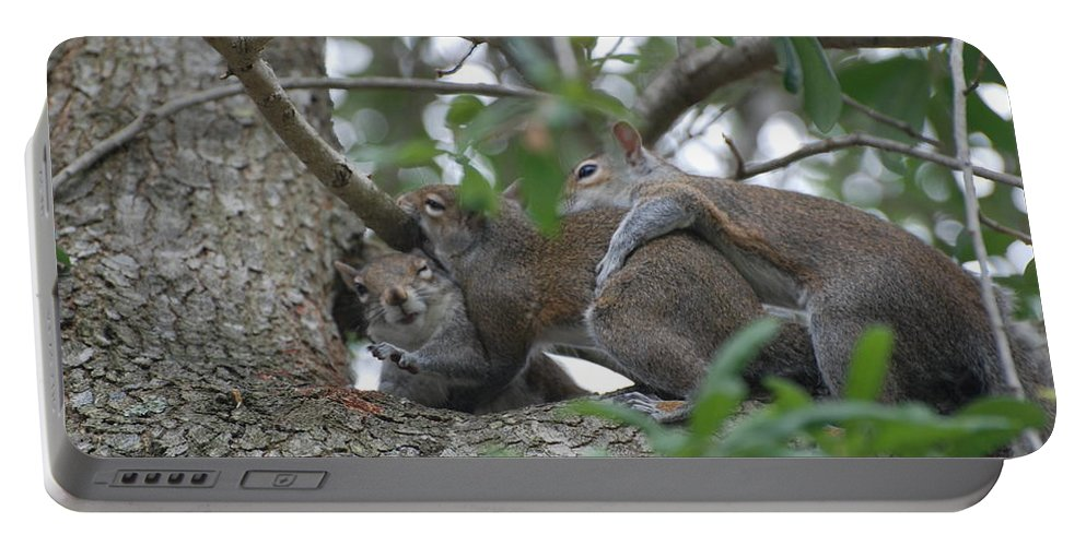 Squirrels Portable Battery Charger featuring the photograph The Fight For Life by Rob Hans