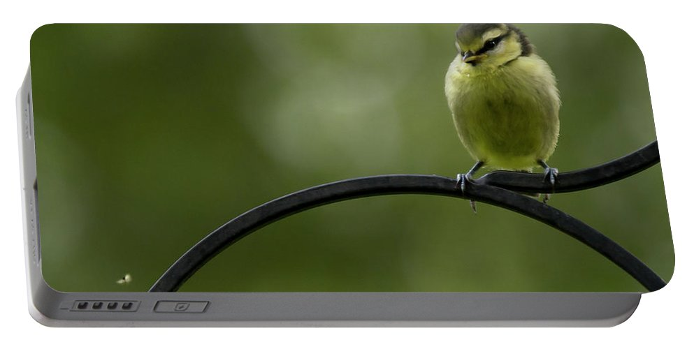 Bird Portable Battery Charger featuring the photograph The Fly by Angel Ciesniarska