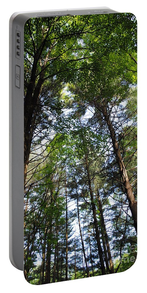 Trees Portable Battery Charger featuring the photograph The Forest by Jost Houk