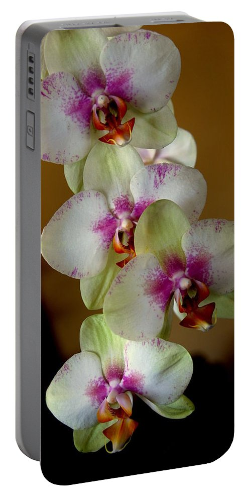 Orchids Portable Battery Charger featuring the photograph The Four Sisters by Susanne Van Hulst