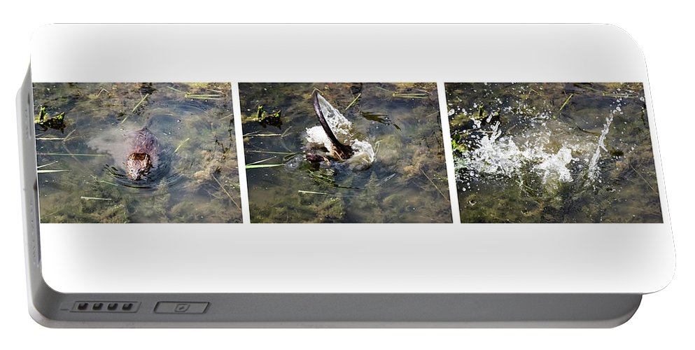 The Great Beaver Escape Triptych Portable Battery Charger featuring the photograph The Great Beaver Escape Triptych by Cynthia Woods