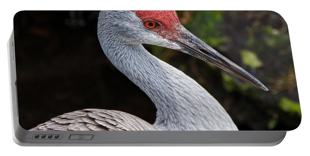 Bird Portable Battery Charger featuring the photograph The Greater Sandhill Crane by Christopher Holmes