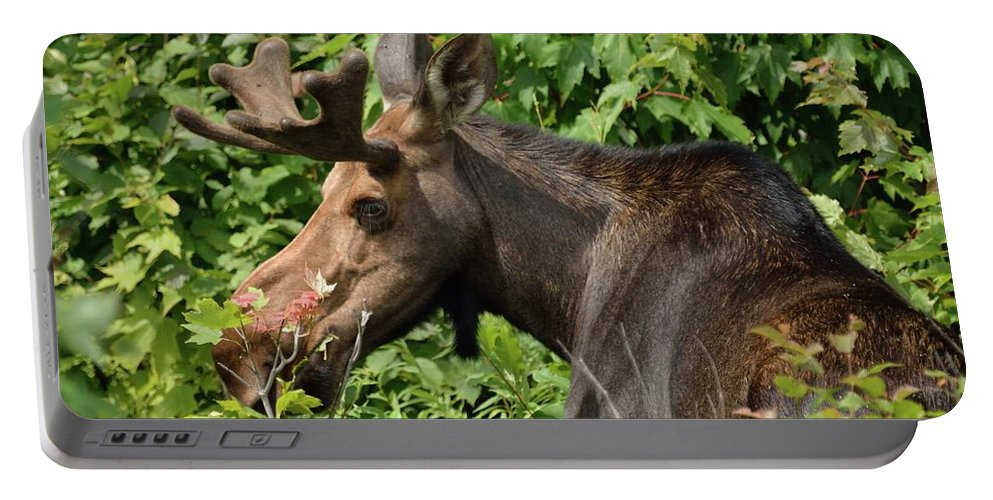 Outdoor Portable Battery Charger featuring the photograph The Hungry Moose by David Porteus