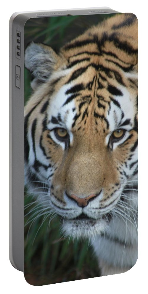 Tiger Portable Battery Charger featuring the photograph The Hunter by Laddie Halupa