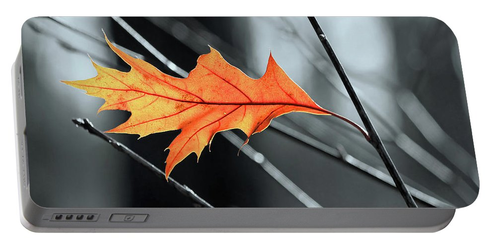 The Last Leaf Portable Battery Charger featuring the photograph The Last Leaf by Carolyn Derstine