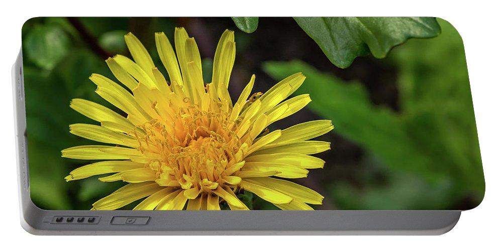 Flora Portable Battery Charger featuring the photograph The Lawn King by Steve Harrington