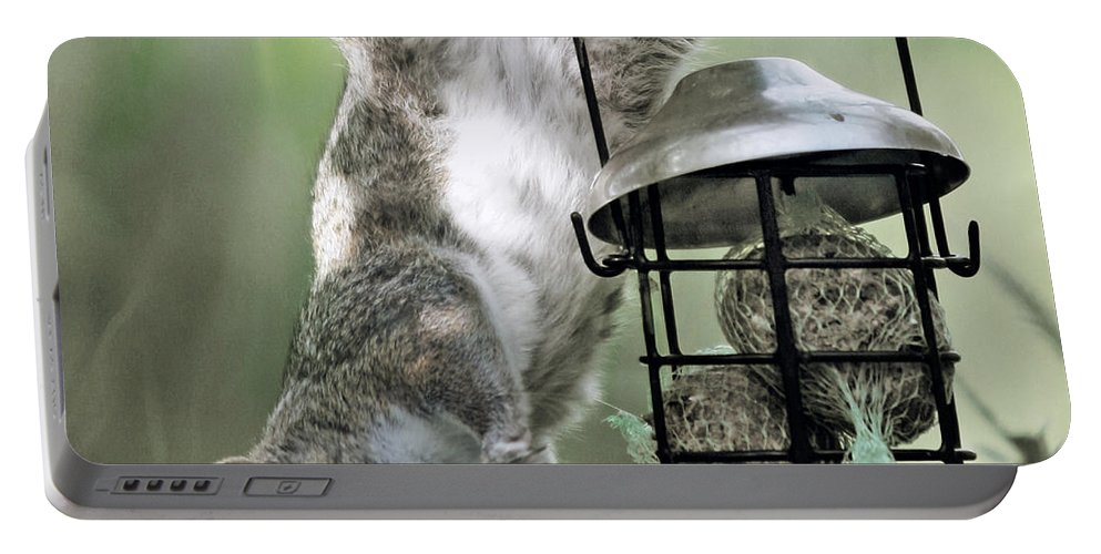 Squirrel Portable Battery Charger featuring the photograph The Little Acrobat by Angel Ciesniarska