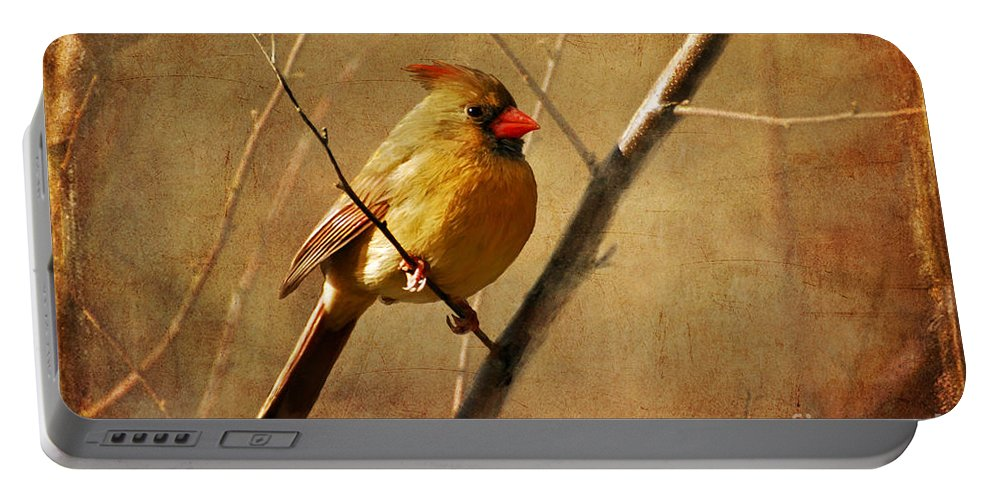 Bird Portable Battery Charger featuring the photograph The Little Mrs. by Lois Bryan