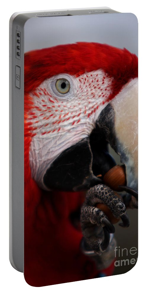 Macaw Portable Battery Charger featuring the photograph The Macaw by Angel Ciesniarska