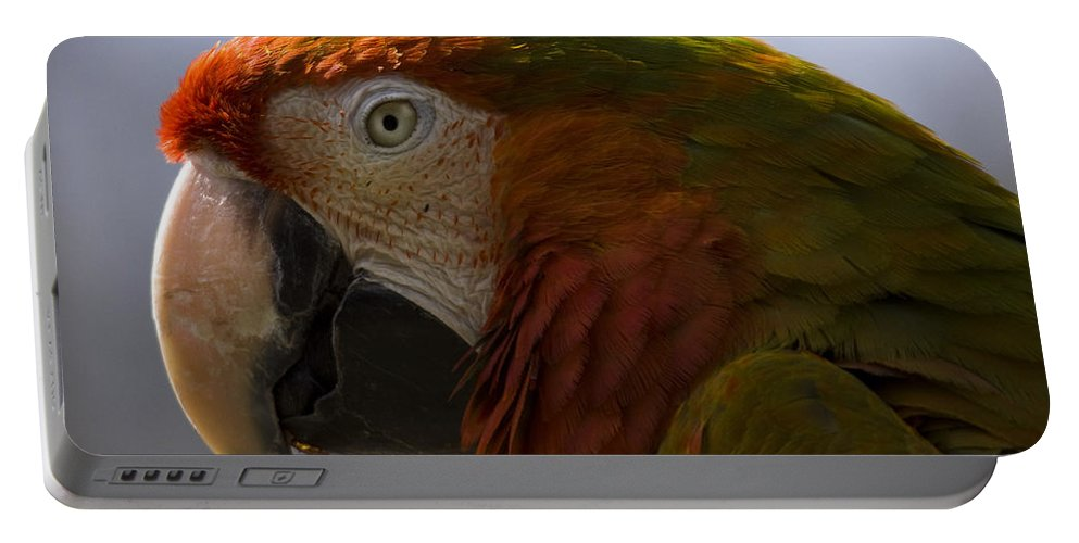 Macaw Portable Battery Charger featuring the photograph The Macaw Portrait by Angel Ciesniarska