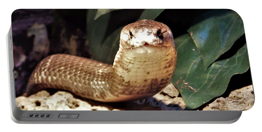 Monocled Cobra Portable Battery Charger featuring the photograph The Monocled Cobra by Yolanda Caporn