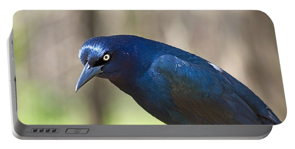 Grackle Portable Battery Charger featuring the photograph The Moocher by Kenneth Albin