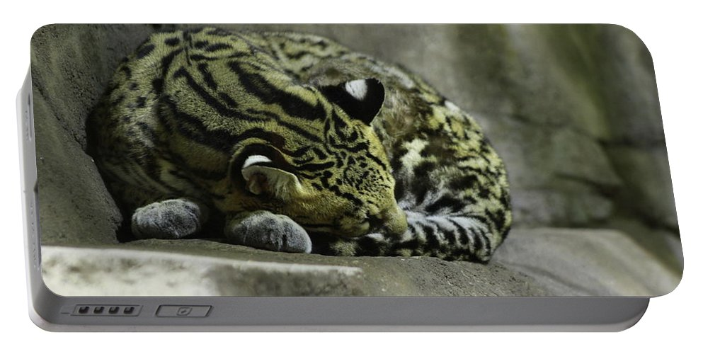 Cat Portable Battery Charger featuring the photograph The Napping Rock by Laddie Halupa