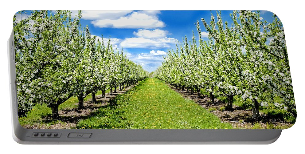 Apples Portable Battery Charger featuring the photograph The Orchard by Greg Fortier