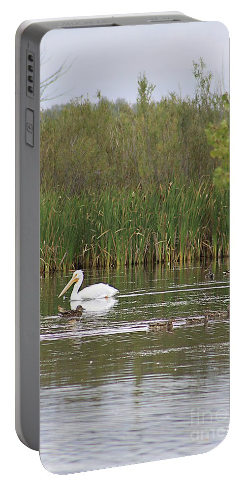 Pelican Portable Battery Charger featuring the photograph The Pelican And The Ducklings by Alyce Taylor