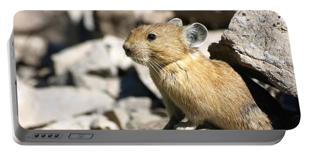 Animals Portable Battery Charger featuring the photograph The Pika by DeeLon Merritt