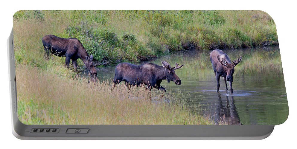 Moose Portable Battery Charger featuring the photograph The Players by David F Hunter