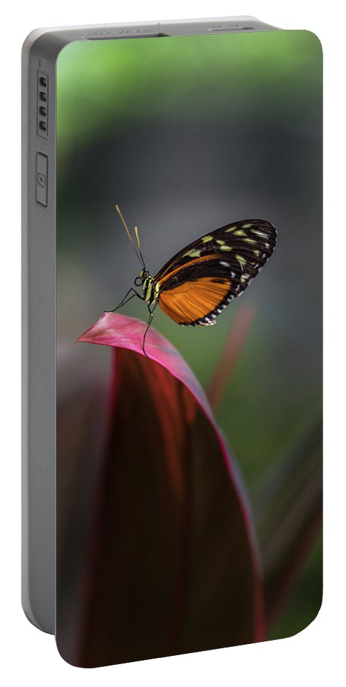 Heliconius Portable Battery Charger featuring the photograph The Podium- 2 by Calazone's Flics