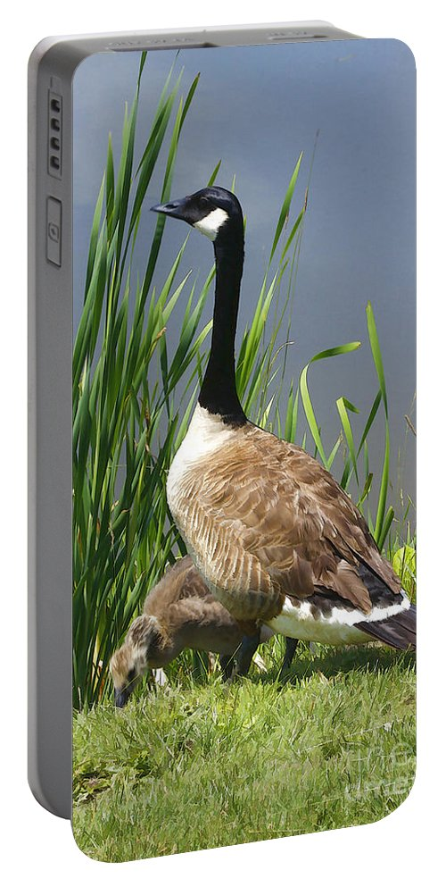 Goose Portable Battery Charger featuring the photograph The Protector by Deborah Benoit