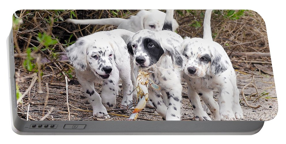 English Setter Portable Battery Charger featuring the photograph The Puppy's Prize by Scott Hansen