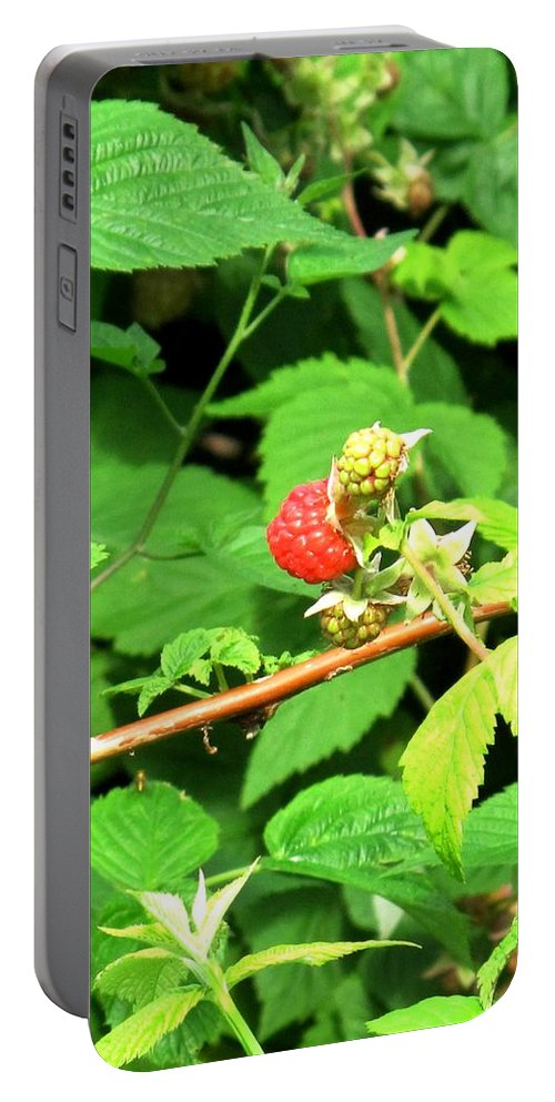 Rasberry Portable Battery Charger featuring the photograph The Rasberry Patch by Ian MacDonald