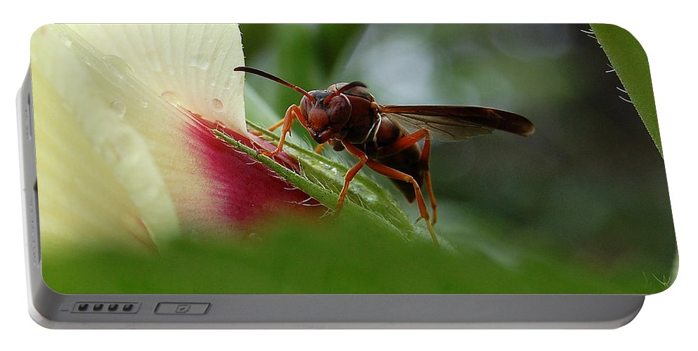 Wasp Portable Battery Charger featuring the photograph The Real Gardener by Robert Meanor