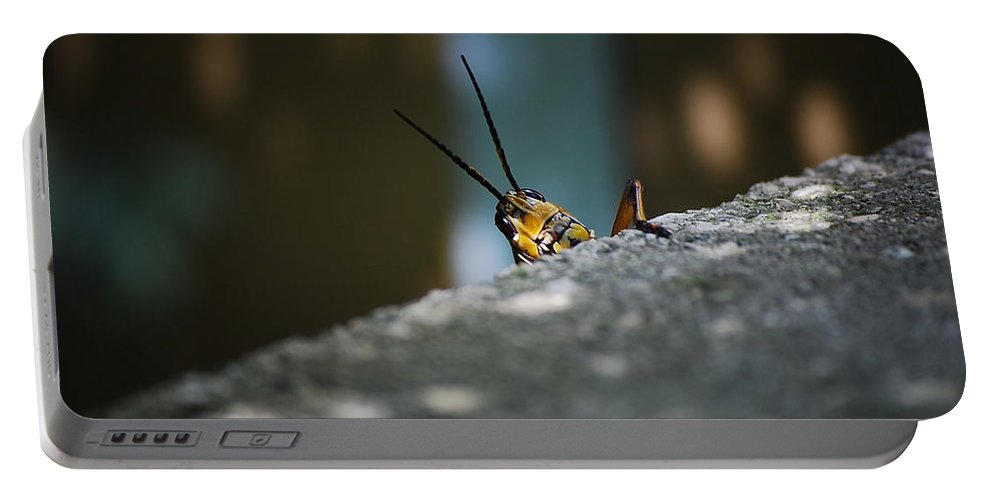 Bugs Portable Battery Charger featuring the photograph The Real Hopper by Robert Meanor