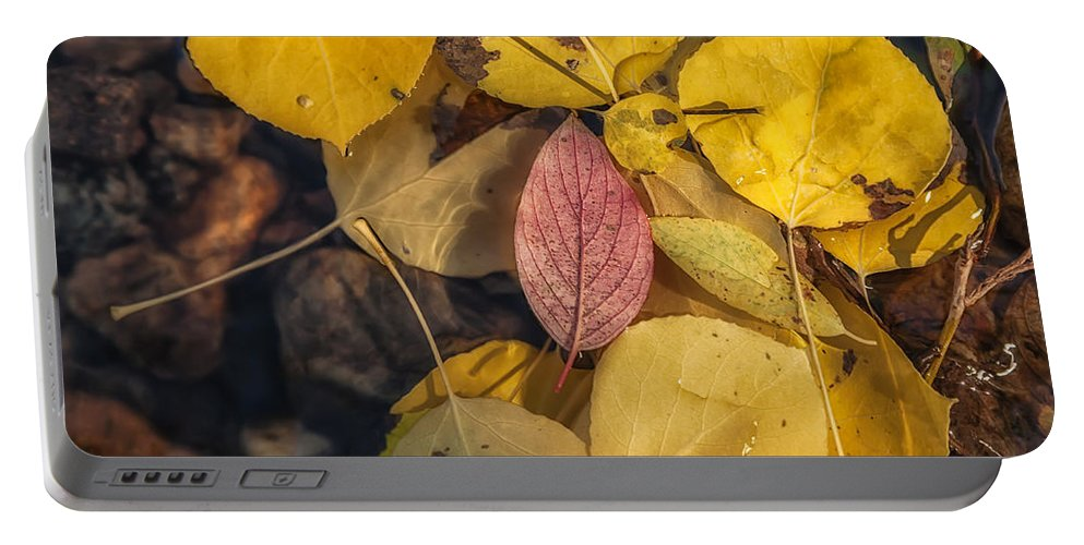 Fall Portable Battery Charger featuring the photograph The Red Leaf by Jonathan Nguyen
