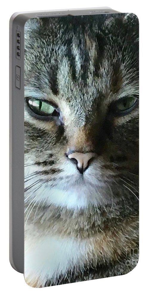 Cat Portable Battery Charger featuring the photograph The Skeptic by Viki Velazquez