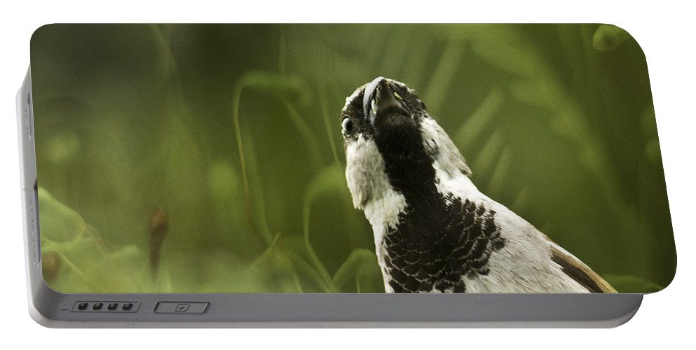 Sparrow Portable Battery Charger featuring the photograph The Sparrow by Angel Ciesniarska