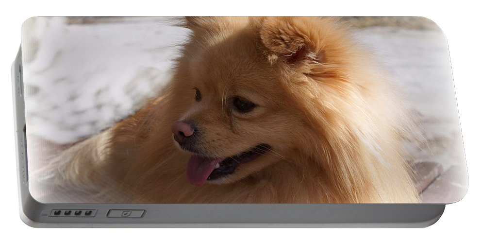 Pomeranian Dog Portable Battery Charger featuring the photograph The Sun on my Back by Joanne Smoley