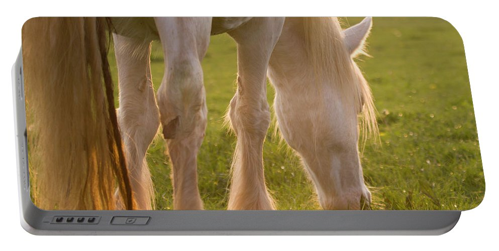 Horse Portable Battery Charger featuring the photograph The Sunlight Caught In The Horse Tail by Angel Ciesniarska