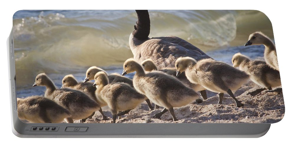 Canada Geese Portable Battery Charger featuring the photograph The Swimming Lesson by Albert Seger