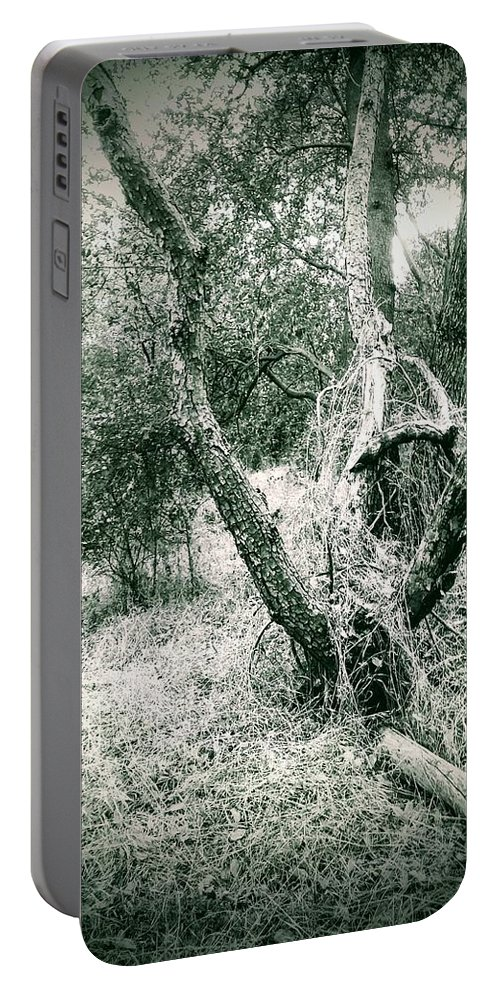 Black And White Trees Portable Battery Charger featuring the photograph The Thinking Tree by Jennifer Bickford