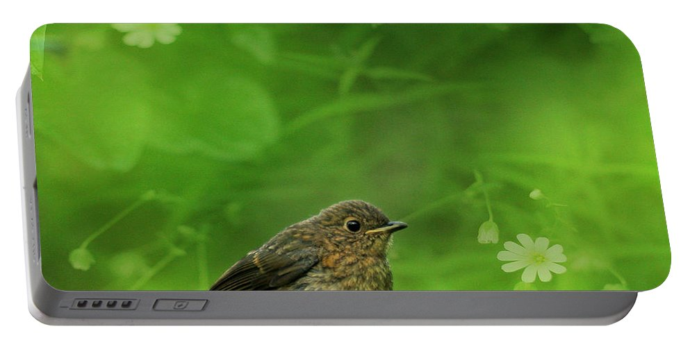 Robin Portable Battery Charger featuring the photograph The Touch Of The Spring by Angel Ciesniarska
