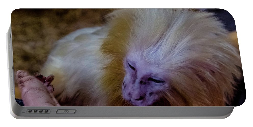Little Monkey Portable Battery Charger featuring the photograph The Touch by Wolfgang Stocker