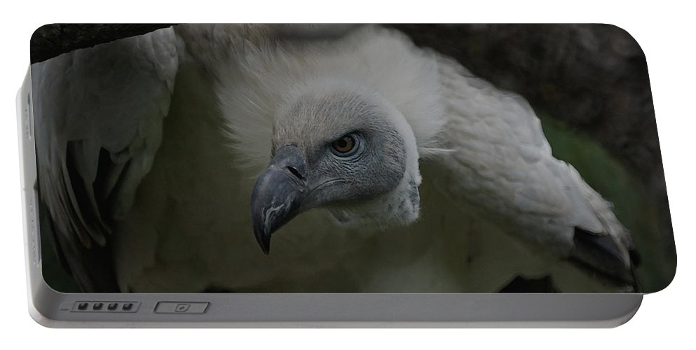 Animals Portable Battery Charger featuring the photograph The Vulture Dry Brushed by Ernie Echols