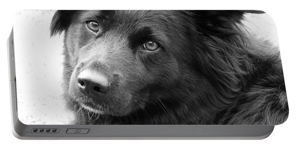 Dog Portable Battery Charger featuring the photograph Thinking by Amanda Barcon