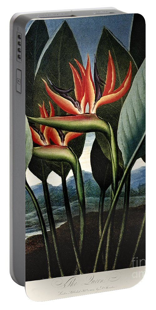 1804 Portable Battery Charger featuring the photograph Thornton: Strelitzia by Granger