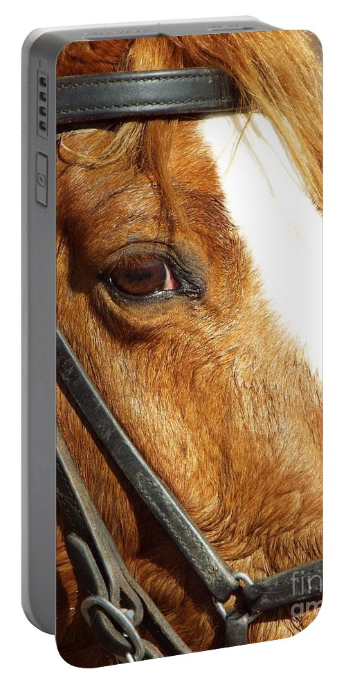 Horse Portable Battery Charger featuring the photograph Those Big Brown Eyes by Caryl J Bohn