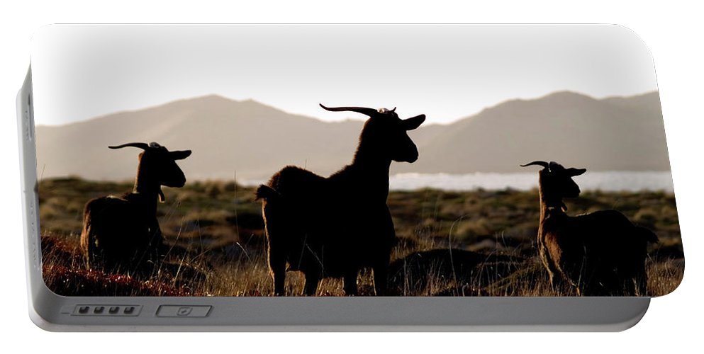 Goat Portable Battery Charger featuring the photograph Three Goats by Pedro Cardona Llambias