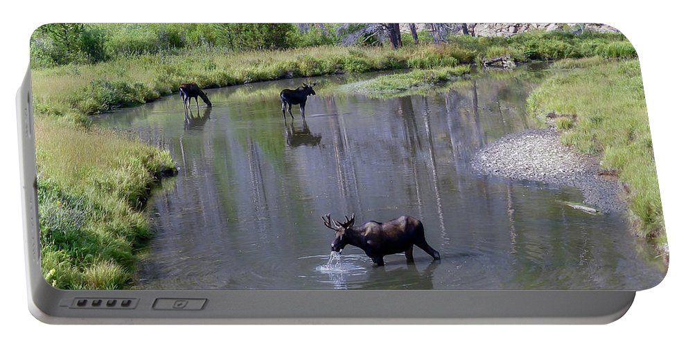 Moose Portable Battery Charger featuring the photograph Three In A Stream by David F Hunter