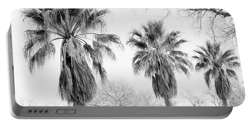 Palms Portable Battery Charger featuring the photograph Three Palms by Gary Richards