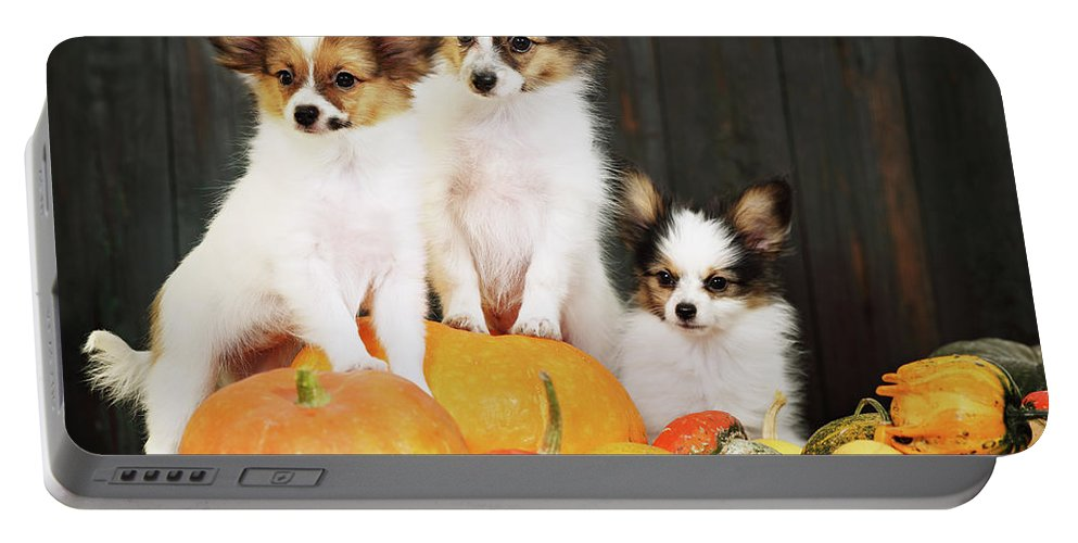 Iuliia Malivanchuk Portable Battery Charger featuring the photograph three puppy with pumpkin by Iuliia Malivanchuk by Iuliia Malivanchuk