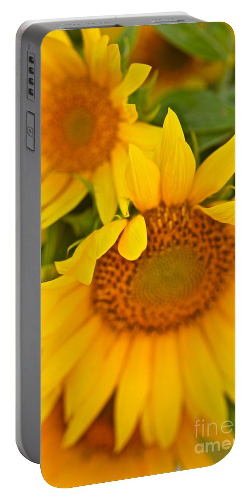 Yellow Portable Battery Charger featuring the photograph Three Sunflowers by Nadine Rippelmeyer